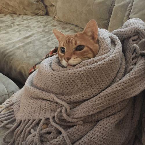 Comfortable vs Cozy